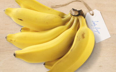 Which banana for what?